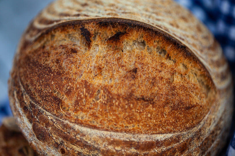 Awesome oven spring in sourdough bread for beginners