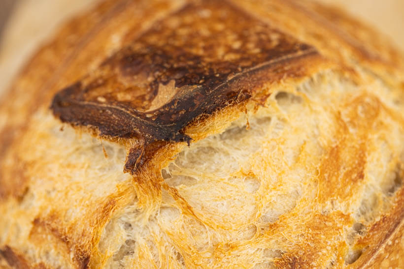 Great oven spring in this simple artisan sourdough bread recipe